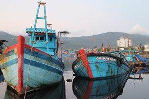 Hàng trăm ngư dân vây bắt 2 tàu cào hải sản trái phép