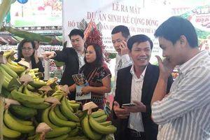 Thừa Thiên Huế: Chuối huyện vùng cao A Lưới chính thức lên kệ siêu thị Big C