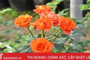 Biến phế phẩm nông nghiệp làm giá thể hữu cơ trồng rau sạch, hoa đẹp