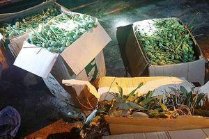 Hà Tĩnh: Phát hiện xe khách chở hơn 60kg quả thuốc phiện để ngâm rượu Tết