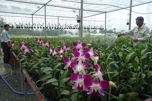 Tái cơ cấu giúp nông nghiệp Đà Nẵng tăng trưởng bình quân 3,61%/năm