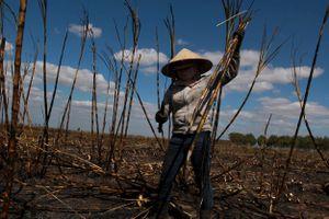 Hơn 100 ha mía của người dân bị lửa thiêu rụi