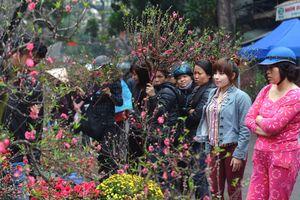 Hà Nội tổ chức 64 chợ hoa Xuân phục vụ Tết Nguyên đán Kỷ Hợi 2019