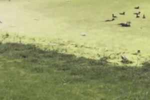 Khoảnh khắc động vật 'ngáo ngơ' khiến con sen ngã ngửa