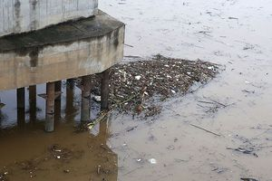Củi rác trôi dạt 'phủ kín' mặt nước sông Hồng