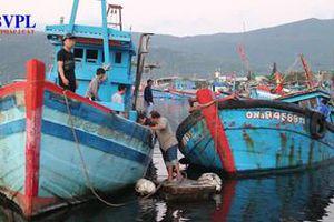 Phát hiện nhóm ngư dân 'lạ mặt' khai thác tận diệt hải sản ở Đà Nẵng