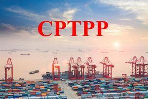 Hôm nay CPTPP có hiệu lực, cần lưu ý những gì?