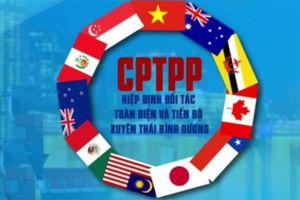 Việt Nam đạt thặng dư thương mại với 3 đối tác mới trong CPTPP