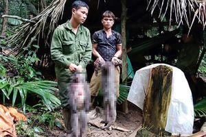 Nhóm thợ săn giết voọc xám mang thai