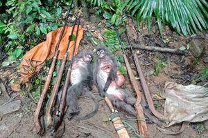 Nghệ An: Bắt nhóm đối tượng săn bắt động vật hoang dã, bắn voọc xám