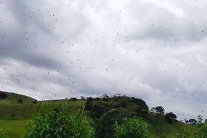 Cảnh cơn mưa nhền nhện ào ạt từ trên trời gây khiếp sợ