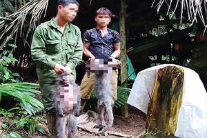 2 cá thể voọc xám quý hiếm tại VQG Pù Mát bị giết hại dã man