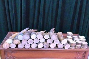 Vận chuyển 51kg ngà voi, chưa kịp nhận tiền công đã bị bắt giữ