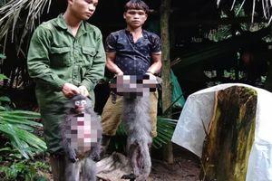 Bắn chết 2 cá thể voọc, nhóm thợ săn có thể bị phạt tới 2 tỷ đồng