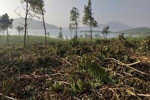 Rừng phòng hộ Bắc Nghệ An: Máu rừng vẫn không ngừng chảy