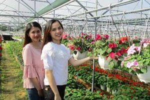 Đà Nẵng: Hoa chậu, hoa treo tăng giá, nhà nông lãi đậm
