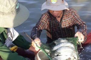 Tôm chân trắng ở với cá đối mục, con nào cũng lớn nhanh, cứ 1ha lãi 300 triệu