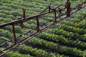 Giữa chiến tranh thương mại, Trung Quốc nhập khẩu ngô, đậu nành giống từ Mỹ