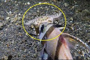 Màn săn giết rợn người của giun ăn thịt dưới đáy biển