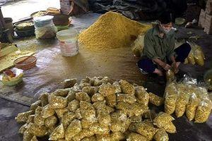 Hải Dương: Phát hiện cơ sở trộn lưu huỳnh vào riềng xay để bán