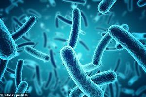 Trung Quốc phát hiện 2 loài vi khuẩn kháng kháng sinh chưa từng biết