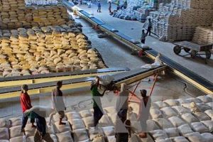 Gạo nhập khẩu từ Campuchia và Myanmar có thể bị EU đánh thuế