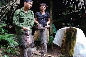 Nghệ An: Bắt 5 người chế tạo súng đi giết voọc