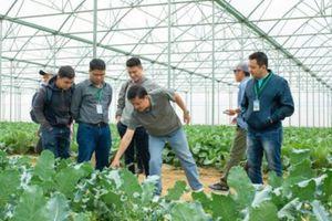 Hợp tác với Vineco, hơn 800 hộ tham gia chuỗi sản xuất nông sản sạch