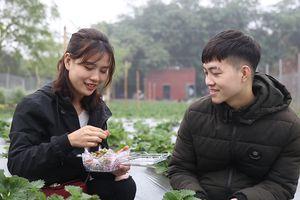 Trải nghiệm vườn dâu tây đầu tiên tại Hà Nội những ngày cận Tết