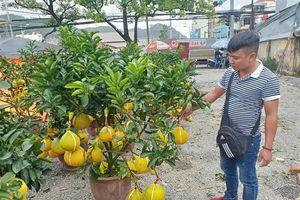 Nha Trang: Bưởi Diễn 4 - 5 triệu đồng/chậu