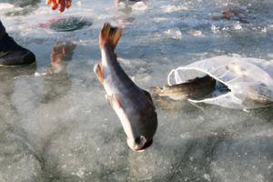 Rét run dưới 0 độ C, cả triệu người vẫn cặm cụi câu cá trên... băng