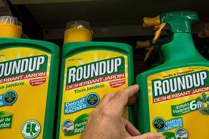 Pháp cấm thuốc diệt cỏ Roundup