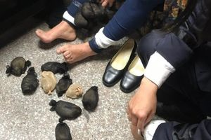 Nữ du khách bị bắt vì giấu 24 con chuột dưới váy