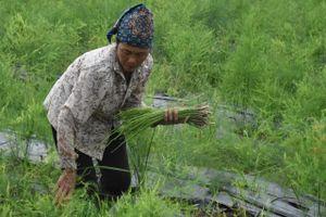 Nâng cao giá trị sản xuất nhờ ứng dụng công nghệ cao trong nông nghiệp