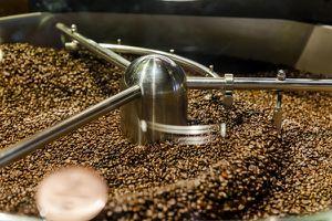BĐKH và nạn phá rừng 'đẩy' cà phê đến bờ vực tuyệt chủng