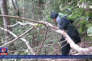 Người dân ngang nhiên phá rừng ở Điện Biên