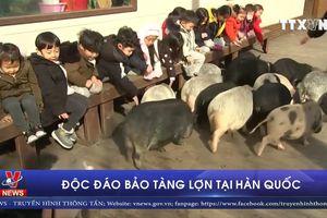 Độc đáo bảo tàng lợn tại Hàn Quốc
