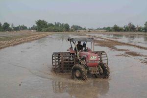 Liên kết để nông nghiệp phát triển