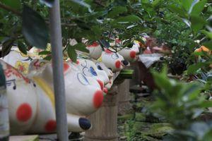 Heo đất tài lộc cõng quất bonsai được lùng mua làm quà biếu Tết