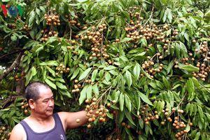 Nông nghiệp Việt đối mặt rủi ro và tổn thương lớn năm 2019?