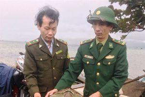 Huế: Thả cá thể rùa biển nằm trong sách đỏ Việt Nam về với tự nhiên