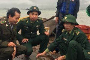 Thừa Thiên- Huế: Thả cá thể vích quý hiếm về môi trường tự nhiên