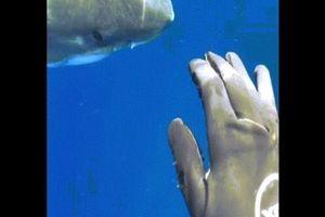 Mỹ: Chạm tay vào mập trắng nặng 2,5 tấn, dài chưa từng có