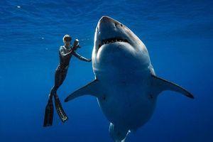 Cá mập trắng 'quái vật' bất ngờ xuất hiện ngoài khơi Hawaii