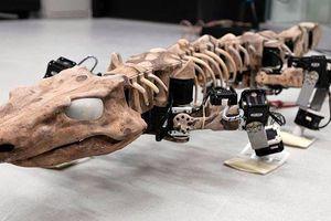 'Tái sinh' loài thằn lằn có niên đại 300 triệu năm đã tuyệt chủng