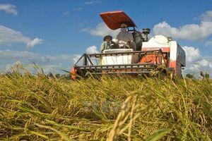 Campuchia chỉ trích việc EU áp thuế nhập khẩu gạo