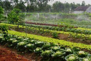 HLV&TT Hà Tĩnh: Ứng dụng công nghệ cao trồng rau VietGAP