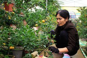 Phong phú đặc sản, cây, trái 'độc', lạ phục vụ Tết