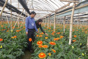 Xây dựng nông thôn mới nâng cao ở Hà Nội: 3 xã đầu tiên về đích