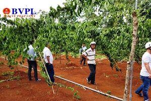 Vườn cây của Chủ tịch và cán bộ địa chính xã bị 'khủng bố', thiệt hại hàng trăm triệu đồng